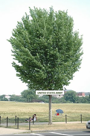 Picture of a large Elm tree